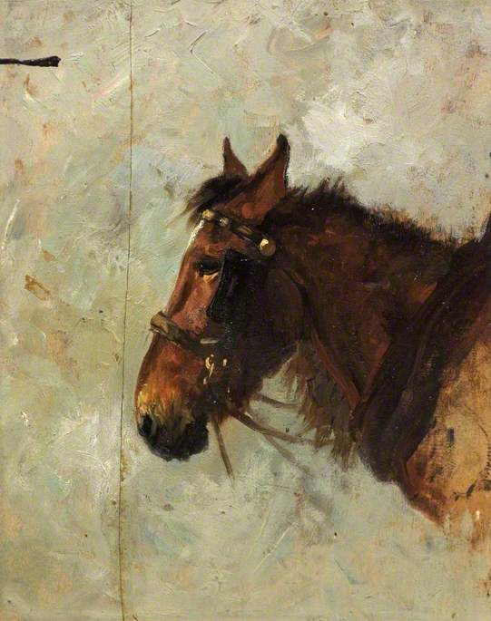 Sketch of Horse's Head