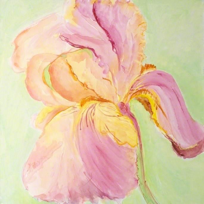 Iris: Sissinghurst Mystery