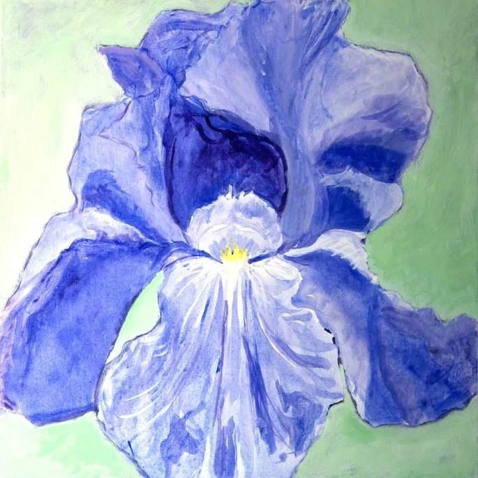 Iris: Jane Phillips
