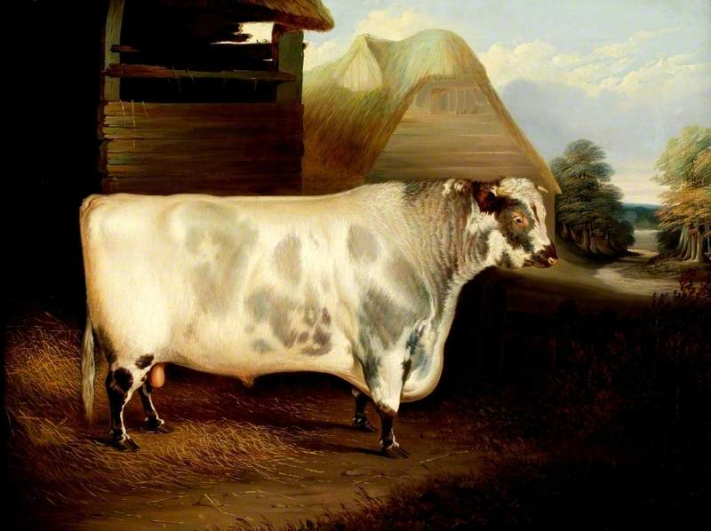 'Duke of Northumberland' (A Bull)