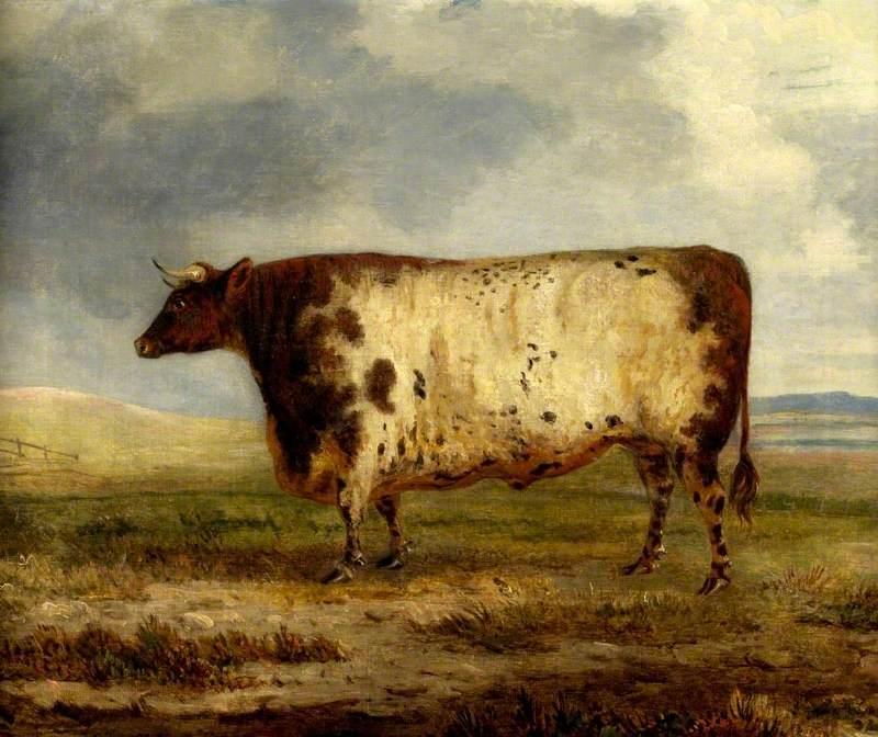 A Durham Ox