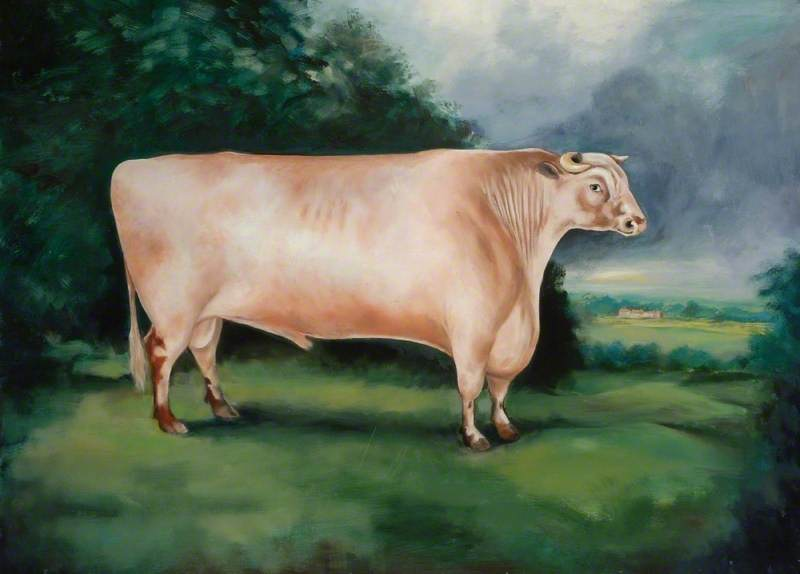 'Comet' (The Durham Ox)