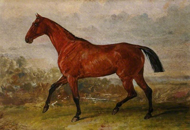 A Horse with a Cropped Tail