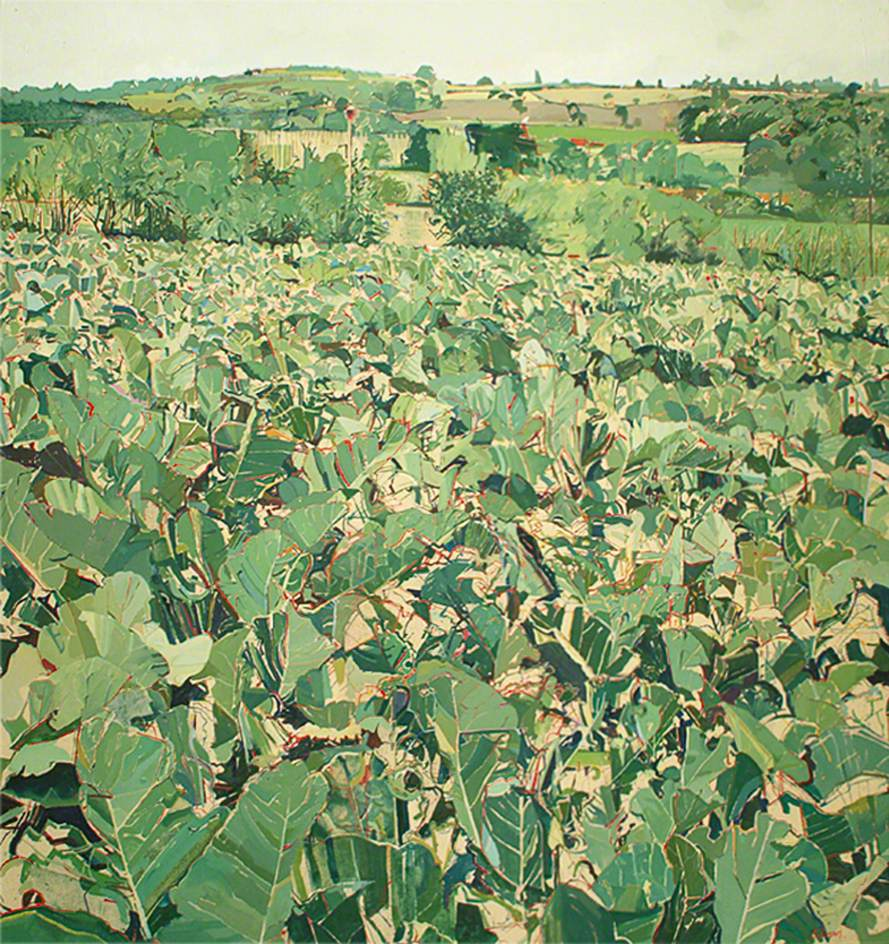 View from the Studio, Cabbage Field