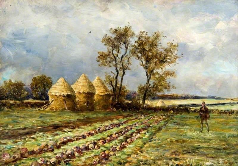 A Turnip Field