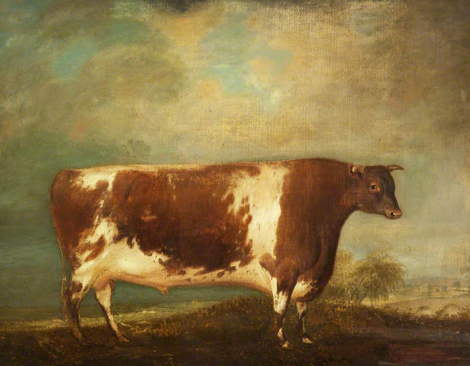 Short-Horned Bull