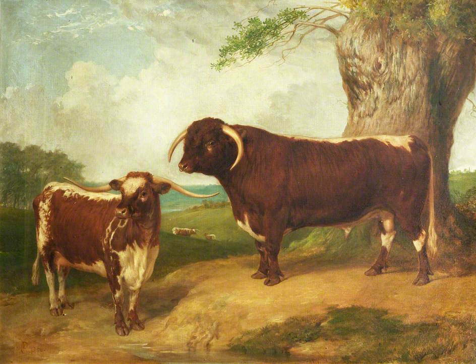 Long-Horned Bull and Cow