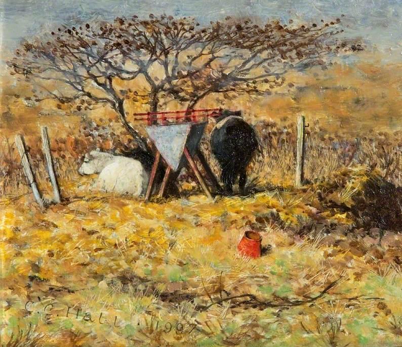 Cows at Figheldean, Wiltshire