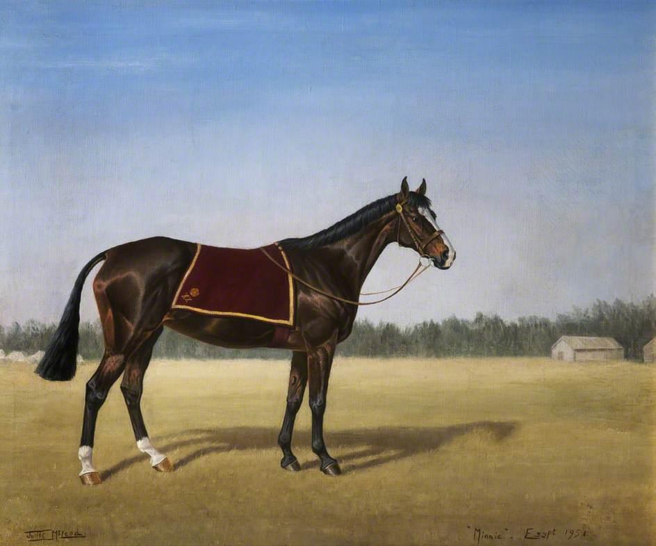 'Minnie' the Horse