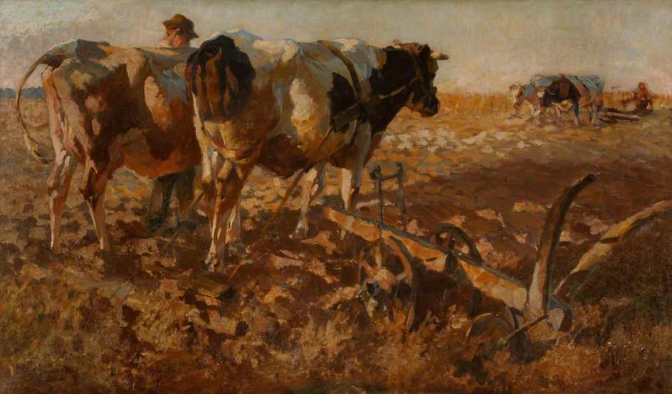 Cattle Ploughing in an Open Landscape