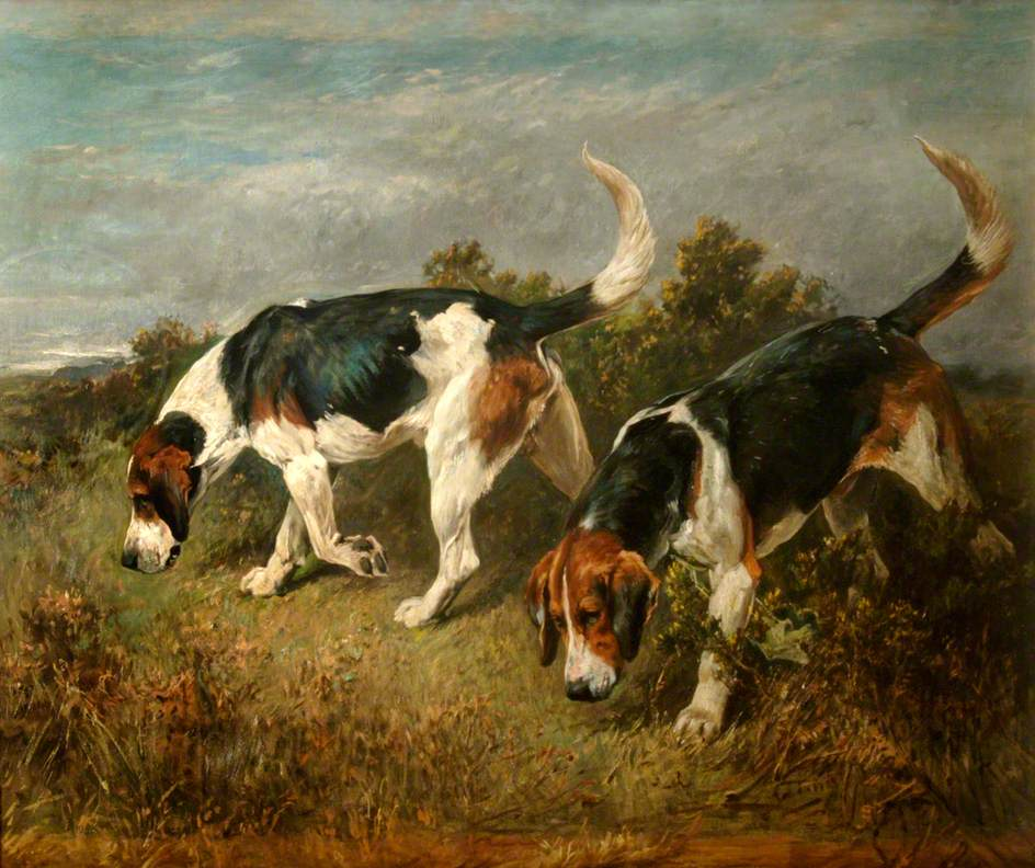 New Forest Buckhounds: 'Moonstone', 5 Years, by Bramham Moor Moonstone out of the Burton Cobweb and 'Challenger', 3 Years, by Bramham Moor Coroner out of the Haricot
