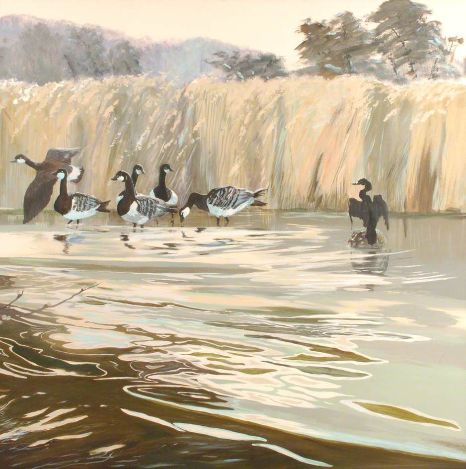 Geese and Cormorant