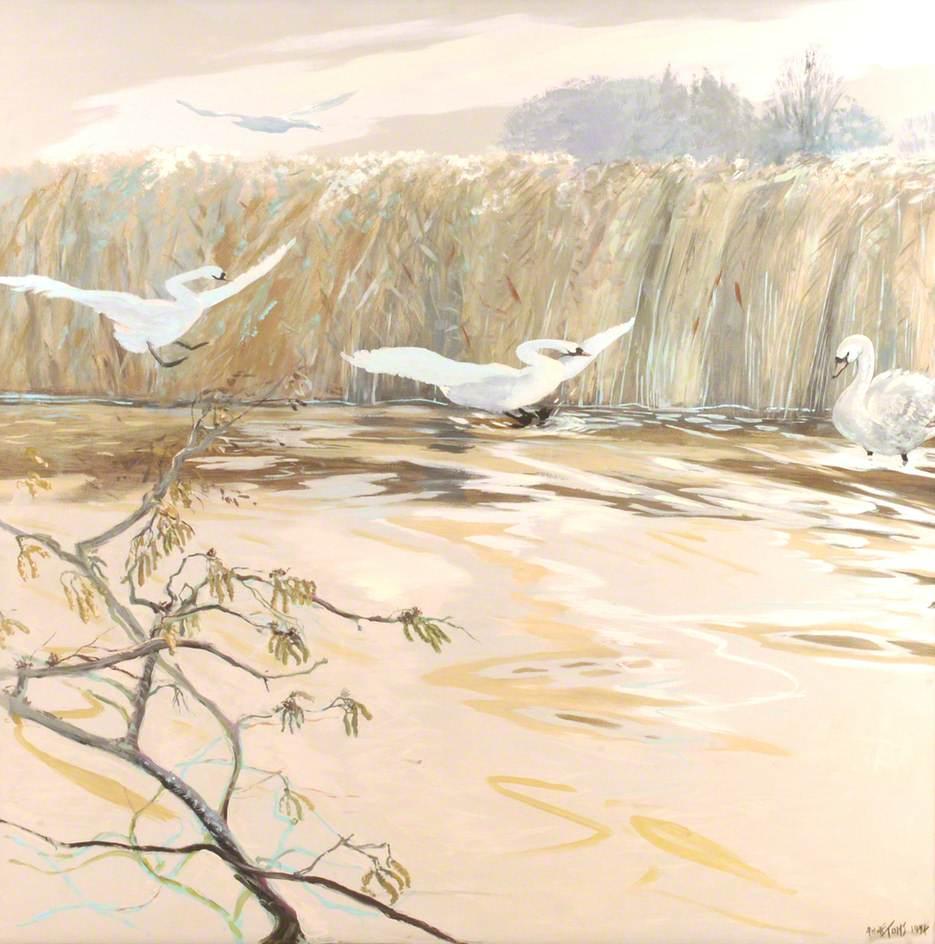Swans Landing