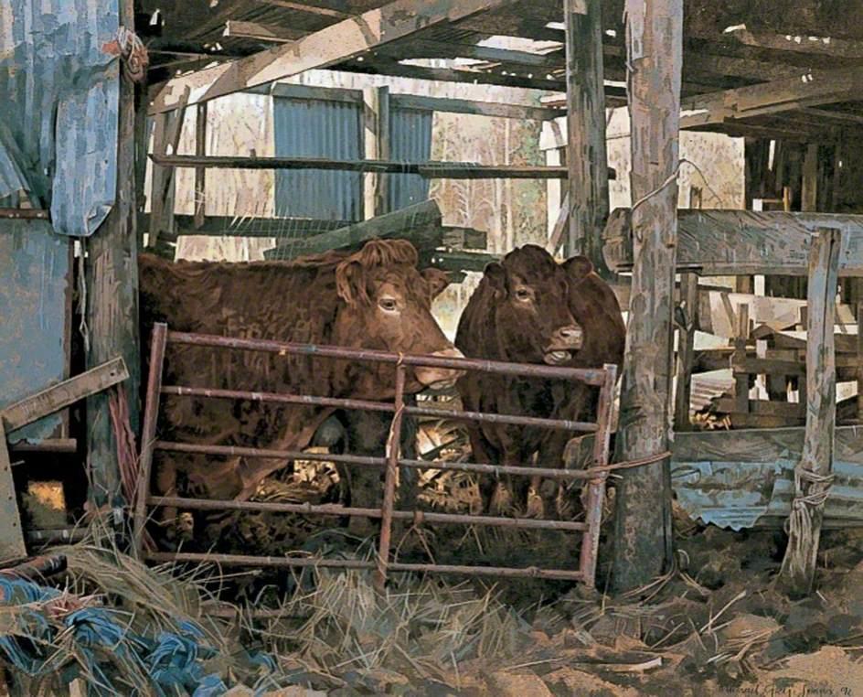 Cows in a Farm Barn near Herne Bay, Kent