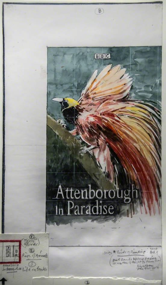 Study – David Attenborough, 'Birds of Paradise'