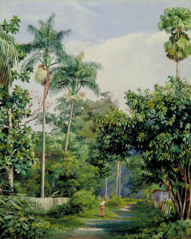 Road near Bath, Jamaica, with Cabbage Palms, Bread Fruit, Cocoa and Coral Trees
