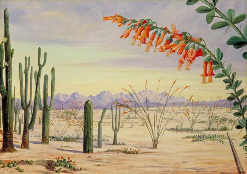Vegetation of the Desert of Arizona