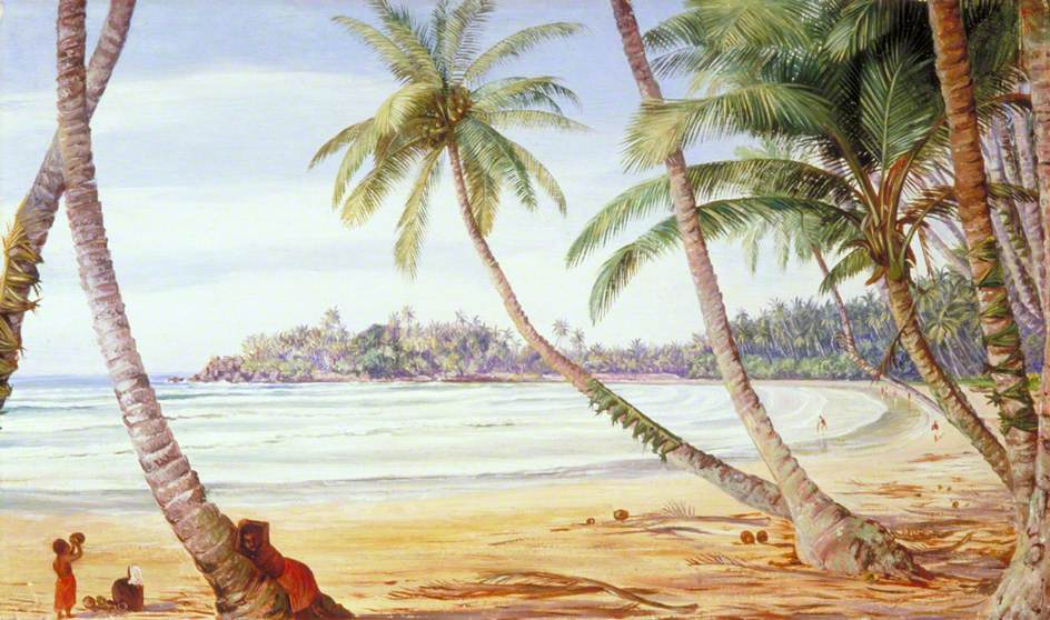 Cocoanut Palms on the Coast near Galle, Ceylon