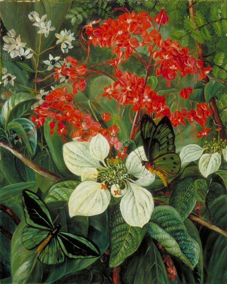 Flowers and Butterflies of Sarawak, Borneo