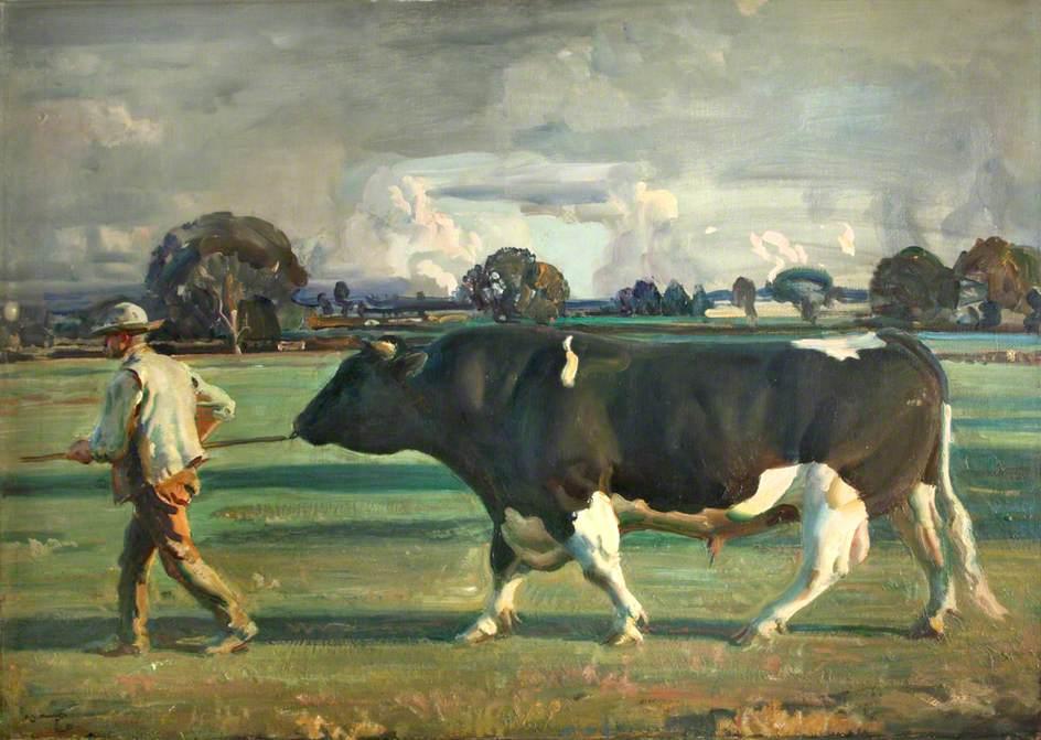 The Friesian Bull