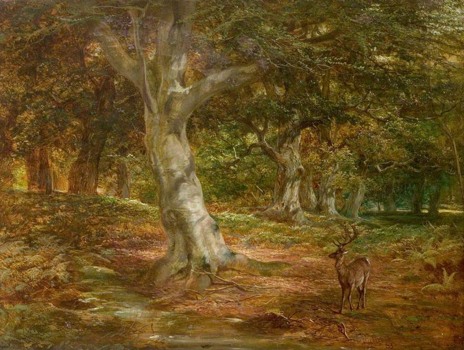 Forest Scene with Deer