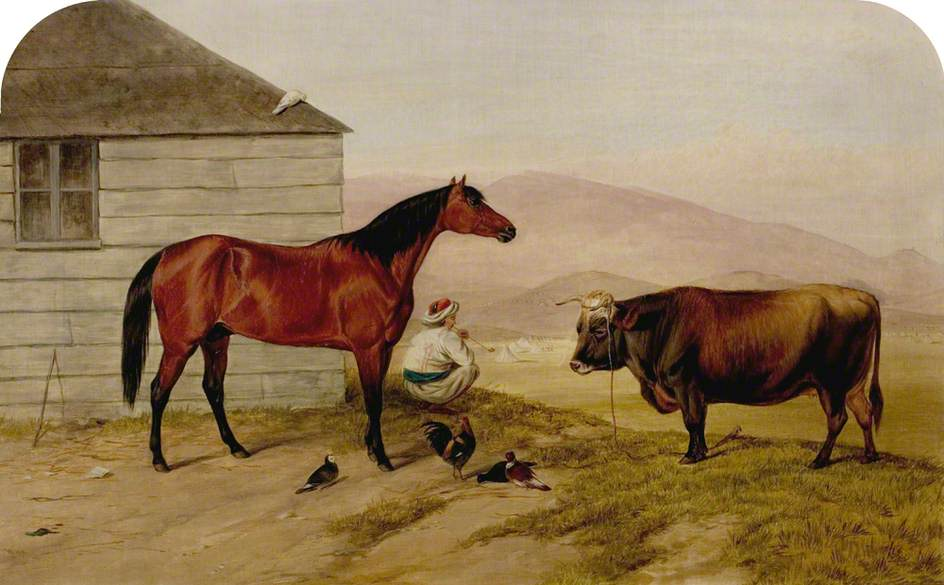 The Turkish Pony 'Bobby', the Cock from Sebastopol, the Cow from the Valley of Baidar, and the Pigeon from Colonel Zarhoski (Commandant of Fort Constatine)