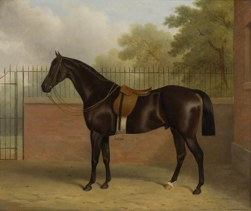 Bay Stallion