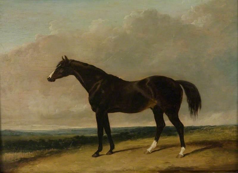 The Racehorse, 'Camel'