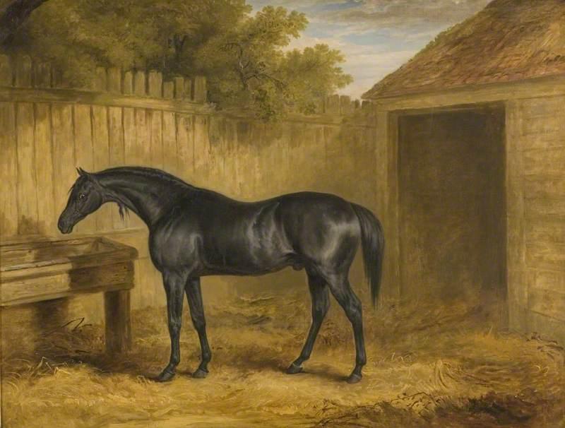Black Stallion Outside a Stable
