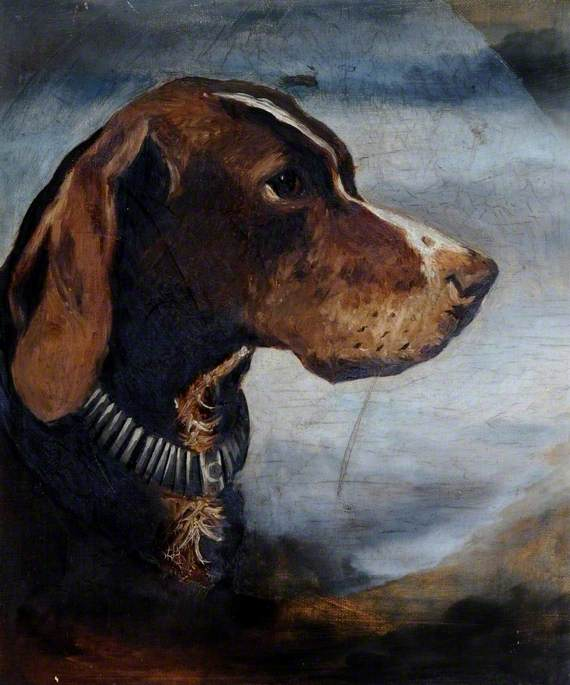 A Brown Dog with a Collar