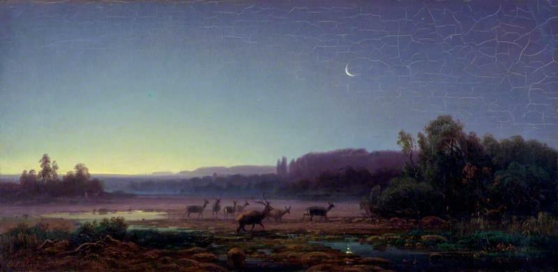 Deer at Dawn, near Munich