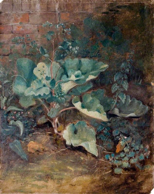 Plants Growing near a Wall