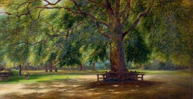 The Old Plane Tree