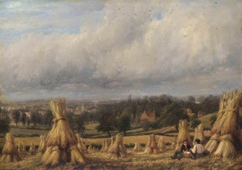 Wheatfield, Newbold Farm, Leamington