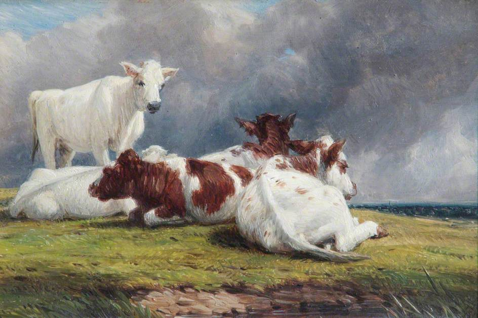 Rearing Calves