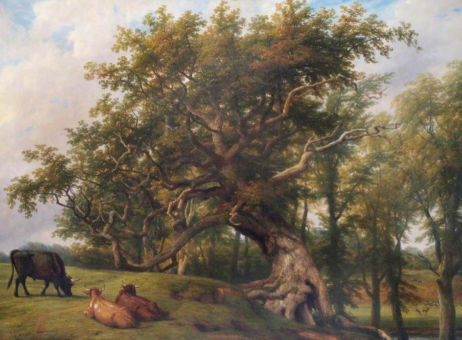 Old Oak, Stoneleigh Park, Warwickshire